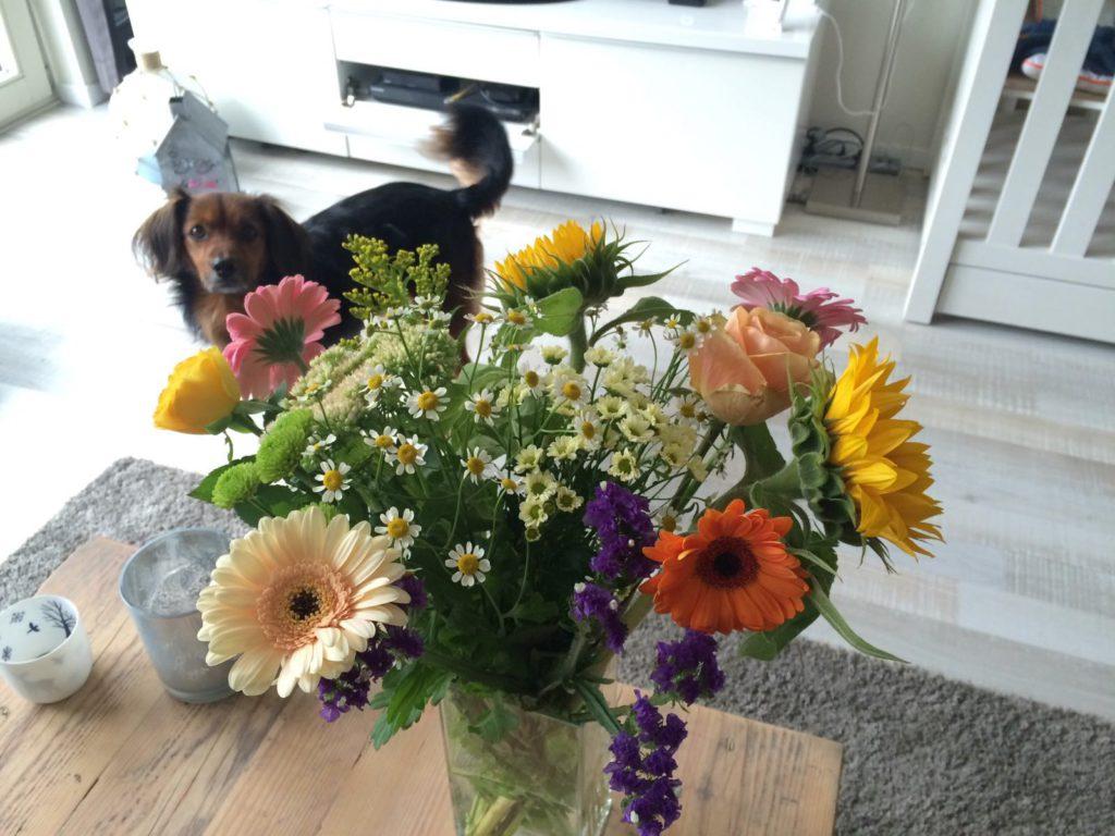 Ik deed wat boodschappen en kocht bloemen om het huis wat op te fleuren