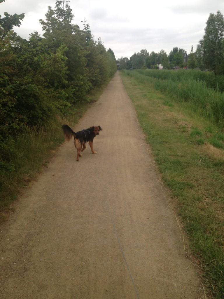 Als eerstje een rondje met Xavi. De zwanen blokkeren nog steeds het pad dus loop ik eens een andere route.