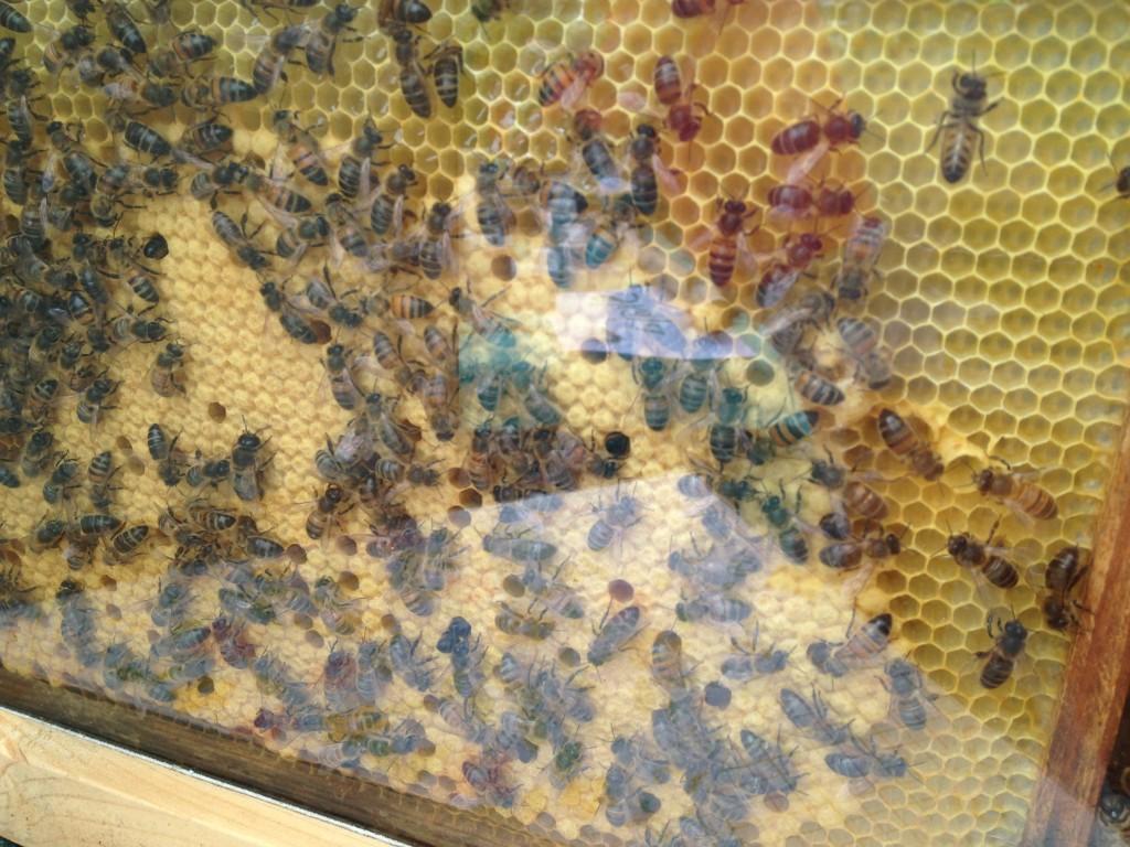 De bijtjes deden hun best, gaaf om te zien